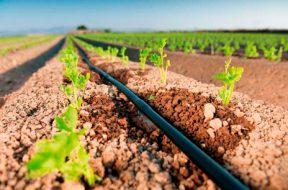 Apostas no potencial de irrigacao no Brasil
