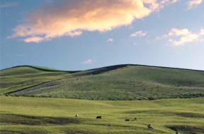 Programa Agricultura de Baixa Emissão de Carbono