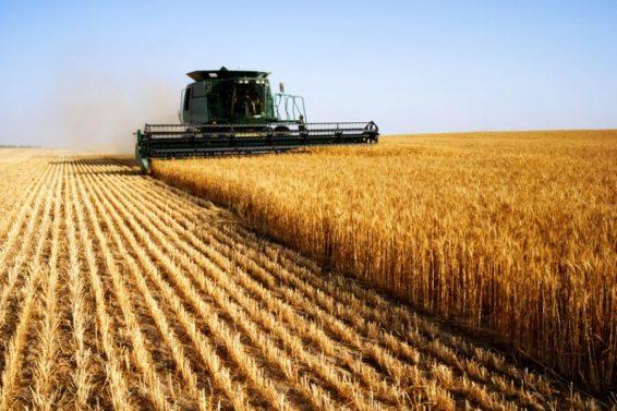 Agropecuária-é-principal-atividade-econômica-em-mais-da-metade-dos-municípios-brasileiros-2