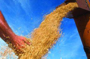SÃO BORJA-RS, BRASIL, 18.02.11: Edair Marchezam produtor de arroz em São Borja/RS. Foto Claudio Fachel/Palácio Piratini