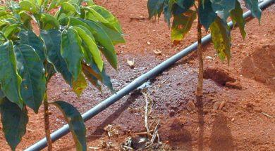 naandanjain-tecnologias-para-irrigacao