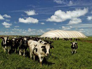 Biodigestor na fazenda Star Milk. O tratamento de degetos animais gera metano que abastece geradores de energia e adubo orgânico reduzindo o impacto ambiental