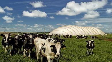Instalação de biogás da CIBiogás