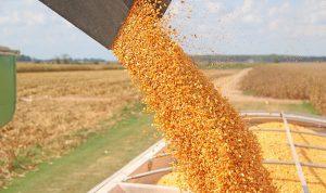 Conab milho