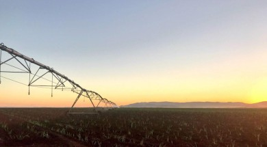 Canavial  irrigado