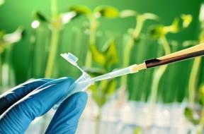 A partir do desenvolvimento desses sistemas, serão feitos estudos de transporte e toxicidade de diferentes tipos de micro e nanopartículas com potencialidades para aplicações em agricultura |Foto: Shutterstock