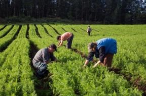 Associações e cooperativas de pequenos produtores de São Paulo com projetos aprovados pela Conab receberão recurso de R$ 3,8 milhões para a execução das propostas, por meio do Programa de Aquisição de Alimentos (PAA).