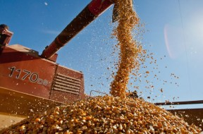 O crescimento da produção de grãos deverá ser de 6,5 milhões de toneladas o que representa um volume 2,8% superior